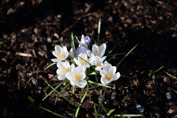 Blomst1